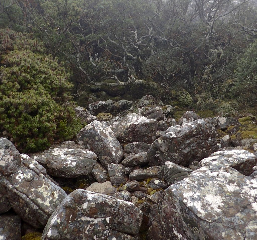 Upland Biome